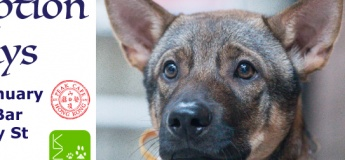 Dog Adoption Days