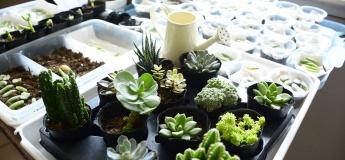 October Camp - Urban Gardener (3-5 yrs)