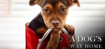 A Dog's Way Home @ Citywalk
